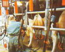 easy milking from the rear